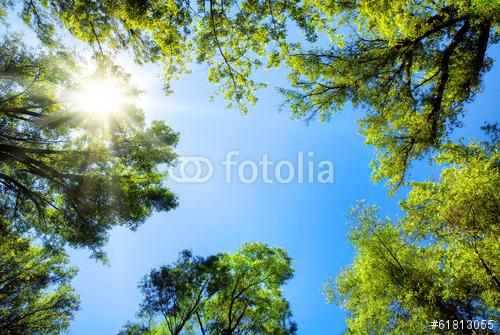 fotolia_61813055