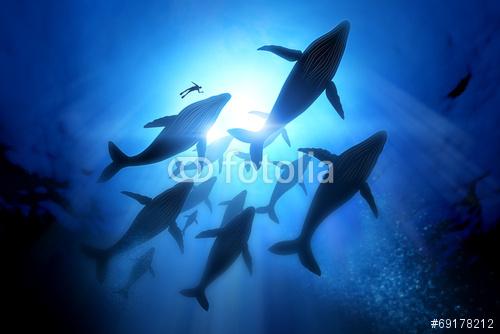 fotolia_69178212
